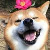 Doggy_shoppin